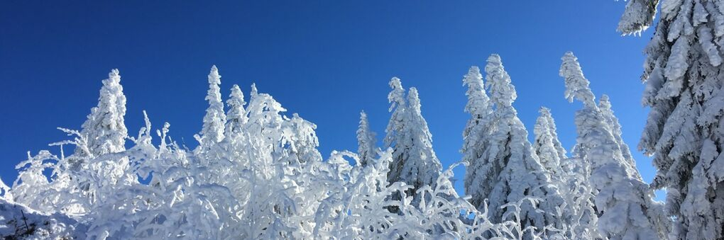 Headerbild: Winterwald_slide.jpg