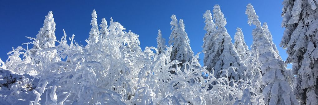 Headerbild: Winterwald_slider.jpg